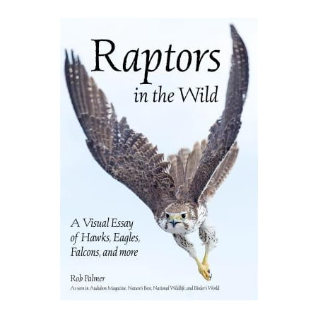 Raptors in the Wild : A Visual Essay of Hawks, Eagles, Falcons and