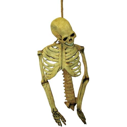 """30"""" Skeleton Torso Halloween Prop"""