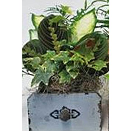 Wood Slab Centerpiece (Wood Drawers, Set of 2, Live Plant Centerpiece (Excludes: CA,)