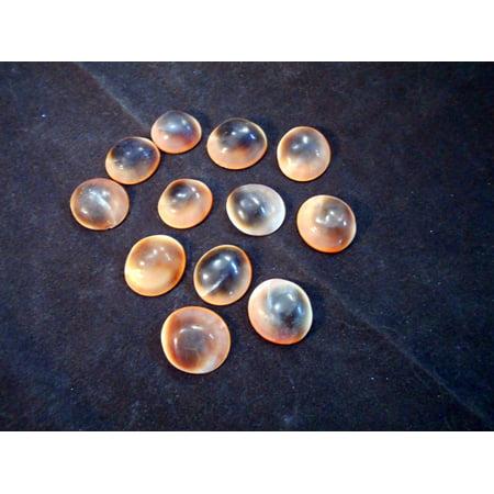 Set of 12 Red Cat Eye Shells (Shiva Shells) Operculum (Size (small) 1/2