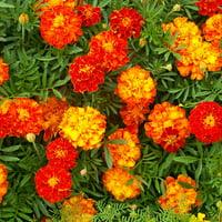 Merry Marigolds 5-Foot Flower Mat