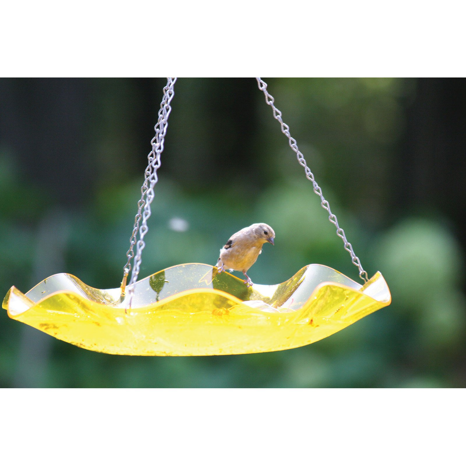 Birds Choice Acrylic Hanging Birdbath