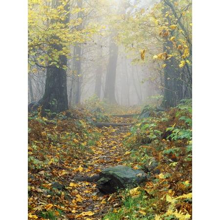 Shenandoah National Park In Virginia Usa Canvas Art   Bilderbuch  Design Pics  26 X 34