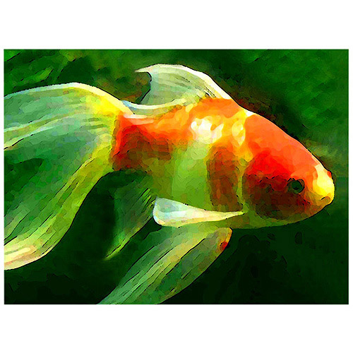 """Trademark Fine Art """"Goldfish"""" Canvas Wall Art by Amy Vangsgard"""