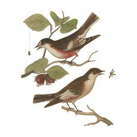 Antique Bird Prints (Antique Bird Pair I Poster Print by James Bolton (8 x)