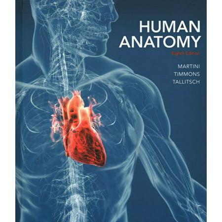 Human Anatomy Pal 30 Practice Anatomy Lab Walmart