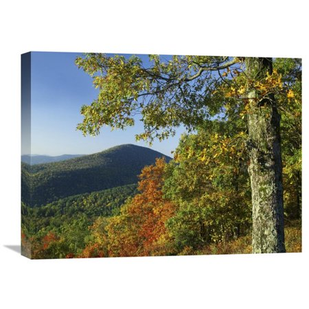 Global Gallery Nature Photographs Broadleaf Forest In Fall Colors As Seen From Doyles River Overlook  Shenandoah National Park  Virginia By Tim Fitzharris Photographic Print On Wrapped Canvas