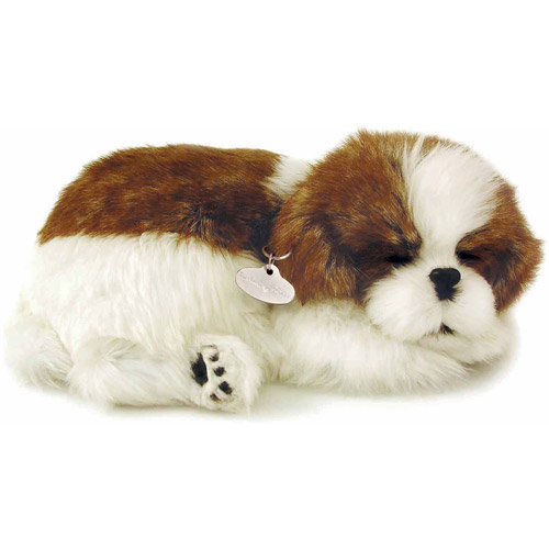 Perfect Petzzz, Shih Tzu
