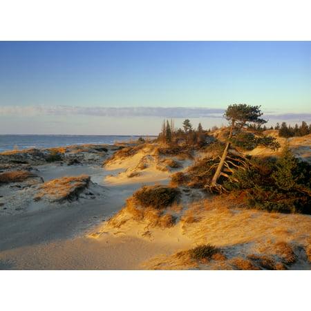 Sand Dunes At Sunset Lake Huron Pinery Provincial Park Ontario Canada Canvas Art - Darwin Wiggett  Design Pics (32 x 24) ()
