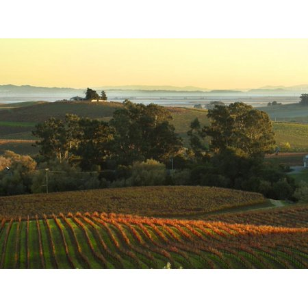 Vineyard from Artesa Winery, Los Carneros, Napa Valley, California Print Wall Art By Janis Miglavs (Napa Cellars Winery)
