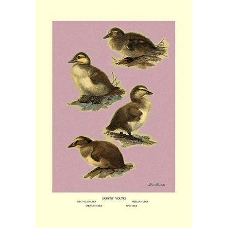 """Four Downy Young Ducks-Fine Art Canvas Print (20"""" x 30"""")"""