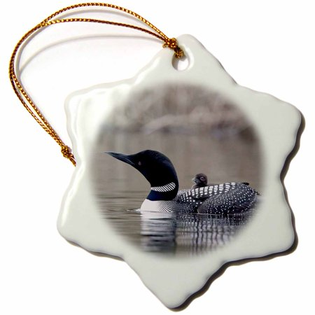 Loon Ornament (3dRose British Columbia. Common Loon with chick-CN02 CSL0062 - Charles Sleicher, Snowflake Ornament, Porcelain, 3-inch)