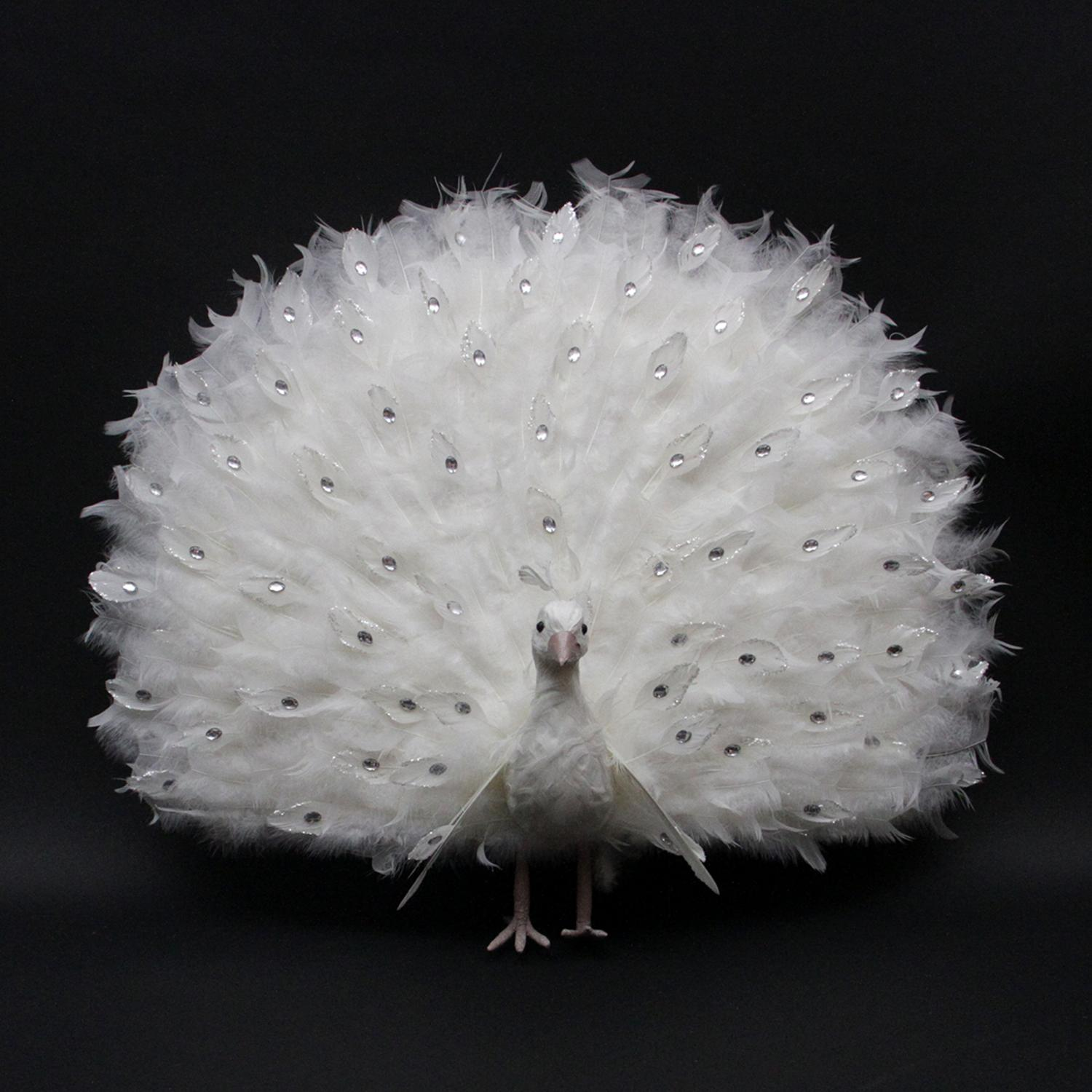 "27"" White Regal Peacock Bird with Open Tail Feathers Christmas Decoration"