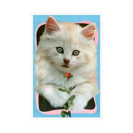 Framed Cute White Cat With Rose By Sabine Stuwer 36X24 Art Print Poster Adorable Kitten Girls Room Picture