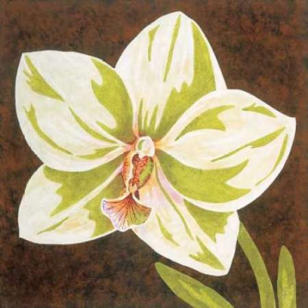 Surabaya Orchid Petites B Poster Print by Judy Shelby
