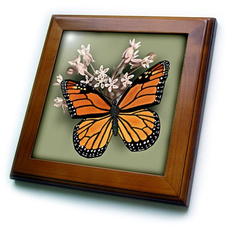 Sister Framed Tile - 3dRose Monarch Butterfly and Pink Milkweed - Framed Tile, 6 by 6-inch
