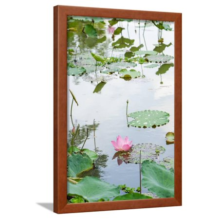 Water Lily Lotus Flower (Lotus or Water Lily Flower Framed Print Wall Art By SweetCrisis)