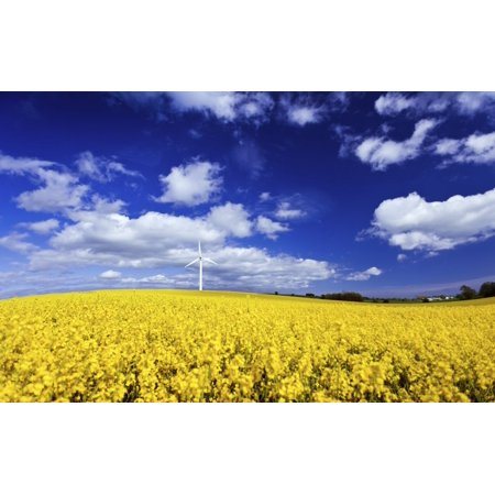 Wind turbine in a canola field against cloudy sky Denmark Canvas Art - Evgeny KuklevStocktrek Images (36 x 23)