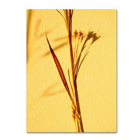 Trademark Fine Art 'Cream Of Wheat 3' Canvas Art by Geoffrey Baris