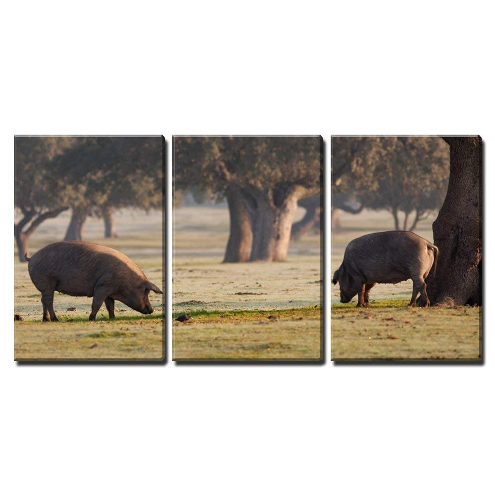 "wall26 - 3 Piece Canvas Wall Art - Iberian Pigs Grazing in the Extremadura Landscape in Spain - Modern Home Decor Stretched and Framed Ready to Hang - 16""x24""x3 Panels"