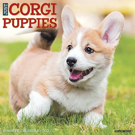 Willow Creek Press 2020 Just Corgi Puppies Wall Calendar Puppies Wall Calendar