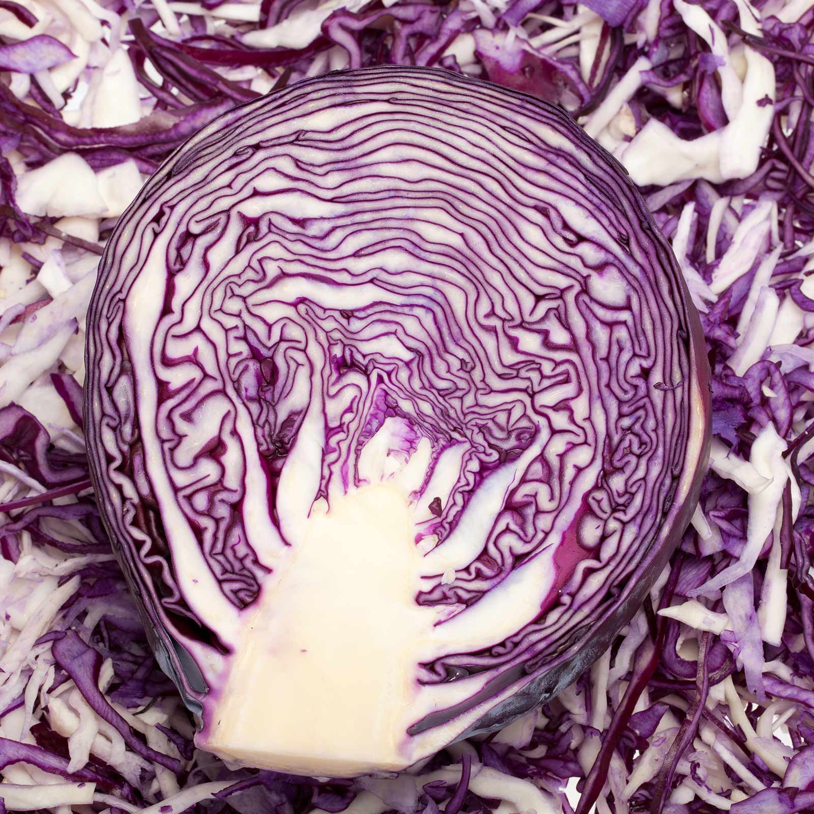 Red Rock Mammoth Cabbage Seeds: 4 Oz Non-GMO, Chemical Free Sprouting Seeds for Vegetable Gardening & Growing Microgreens by Mountain Valley Seed Company