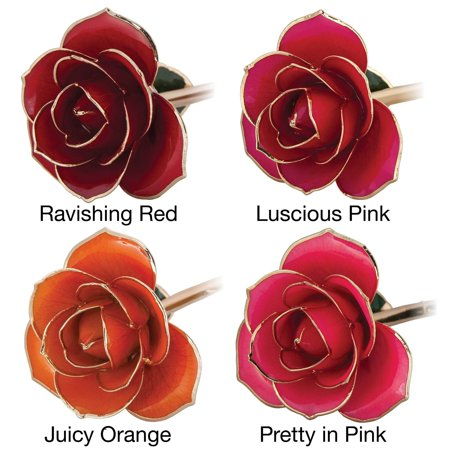 Riddles Group 24k Gold Dipped Laquered Rose
