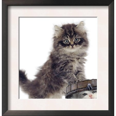 Domestic Kitten (Felis Catus) on Basket with Another Kitten... Framed Art Print Wall Art