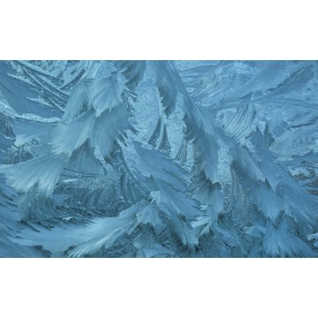 Ice patterns formed on glass after a hard frost Nelson Wakefield New Zealand Stretched Canvas - Nicola M Mora  Design Pics (19 x 12) 12 In Ice Pattern