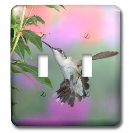 Humminbird Switch - 3dRose Ruby-throated Hummingbird female, Double Toggle Switch