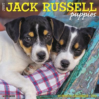 Jack Russell Dachshund (Just Jack Russell Puppies 2019 Wall Calendar (Dog Breed Calendar))