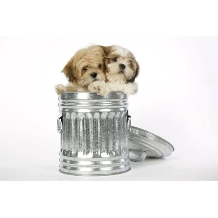 Lhasa Apso and Shih Tzu Puppies in a Dustbin Print Wall Art