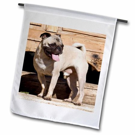 3dRose USA, California. Pug standing on wooden bench., Garden Flag, 12 by 18-Inch ()