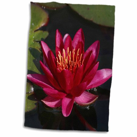 - 3dRose Water lily, Magenta. - Towel, 15 by 22-inch