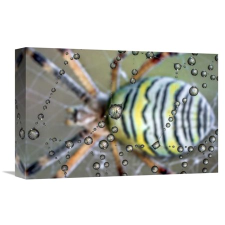 Global Gallery Ghizzi Panizza Alberto,'The mirror of the spider' Stretched Canvas Artwork ()