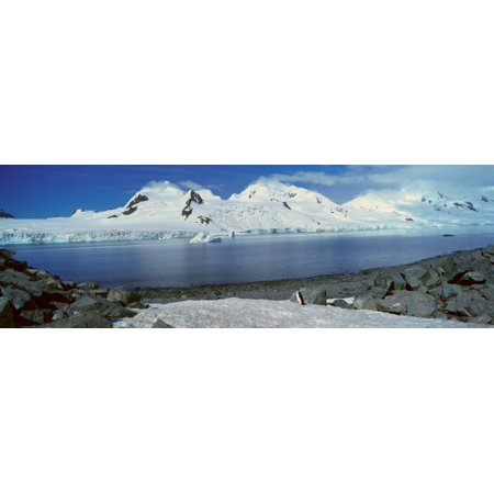 Panoramic view of Chinstrap penguin (Pygoscelis antarctica) among rock formations on Half Moon Island Bransfield Strait Antarctica Stretched Canvas - Panoramic Images (27 x 9)