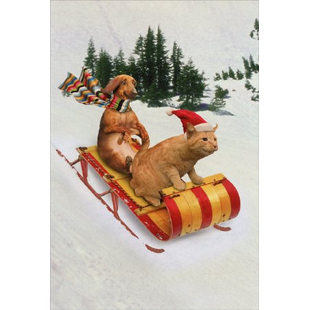 Nobleworks Animal Antics Dachshund and Cat Sledding Box of 12 Humorous / Funny John Lund Christmas Cards](Dachshund Halloween Cards)