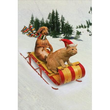 Nobleworks Animal Antics Dachshund and Cat Sledding Humorous / Funny John Lund Christmas Card](Funny Animal Christmas)
