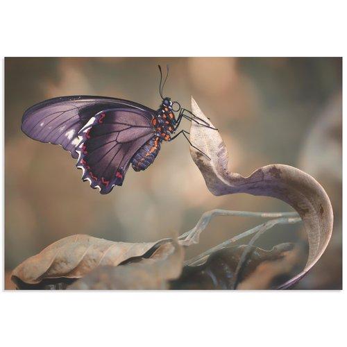 Metal Art Studio 'Swallowtail Butterfly' by Jimmy Hoffman Butterfly Wall Art on Metal or Acrylic