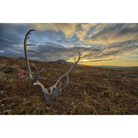 A caribou antler lies in silence on the flanks of Crow Mountain Old Crow Yukon Canada Canvas Art - Robert Postma Design Pics (18 x 12)