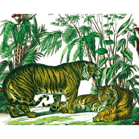 Wild Jungle - Jungle Flair V Poster Print by Wild Apple Portfolio