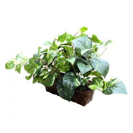 Fake Plant 20 Hour Battery Spy Covert Wifi Hidden Camera ...