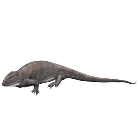 Ophiacodon Is An Extint Synapsid From The Early Permian Of New Mexico Poster Print By Nobumichi Tamurastocktrek Images