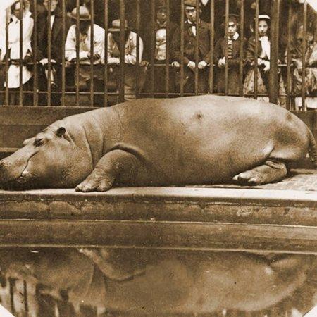 Obaysch the Hippopotamus, London Zoo, 1852, by Don Juan, Comte De Montizón Print Wall Art](Zoo Bar London Halloween)