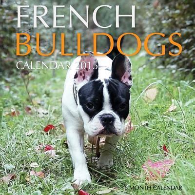 French Bulldogs Calendar 2015 : 16 Month Calendar