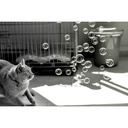 LAMINATED POSTER Play Cat Bubbles Animals Poster Print 24 x 36