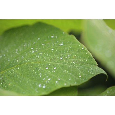 Framed Art for Your Wall Dew Green Plant Petal Drops Misty Macro Leaf 10x13 (Drop Frame)