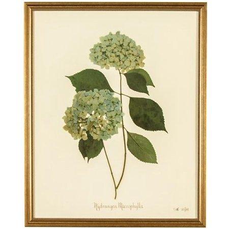 Wall Art Print Hydrangea Macrophylla Flower New Framed Zt 1653