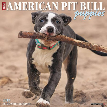 American Pit Bull Terrier Puppies 2019 Wall Calendar (Dog Breed Calendar) (Terriers 2013 Wall Calendar)