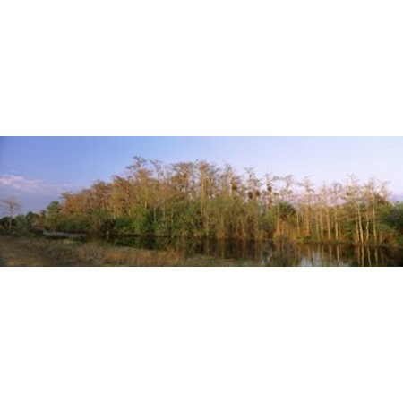 Reflection of trees in water Turner River Road Big Cypress National Preserve Florida USA Canvas Art - Panoramic Images (18 x (A Tree Planted By Rivers Of Water)
